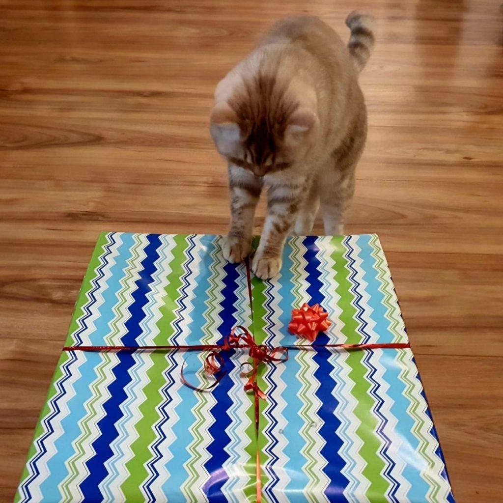 50 tolle Geschenke für Katzenliebhaber by Mywhispercats.com