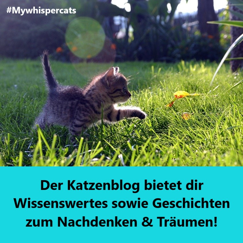 Mywhispercats Katzenblog