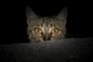 Deine Katze an Silvester – 6 Tipps um es ihr so angenehm wie möglich zu machen