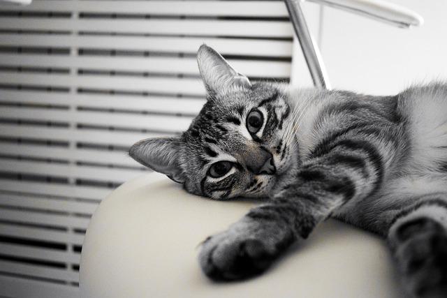 10 interessante Fakten über Katzen die du kennen solltest.