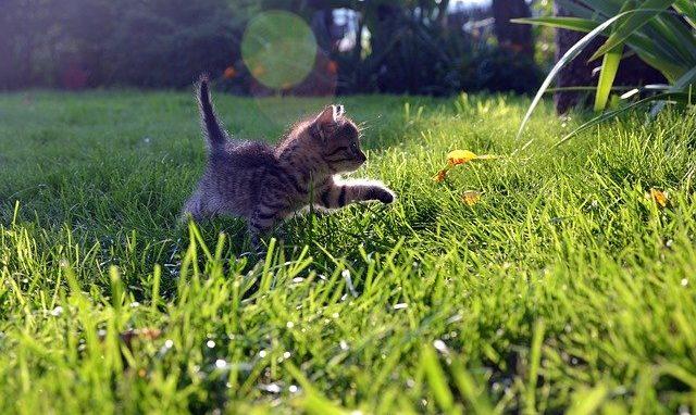 Abenteuer eines Kätzchens