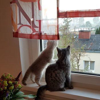 MyWhisperCats.com - Blog: Eine Katze bedeutet Verantwortung