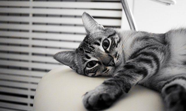 Interessante Fakten über Katzen by Mywhispercats.com