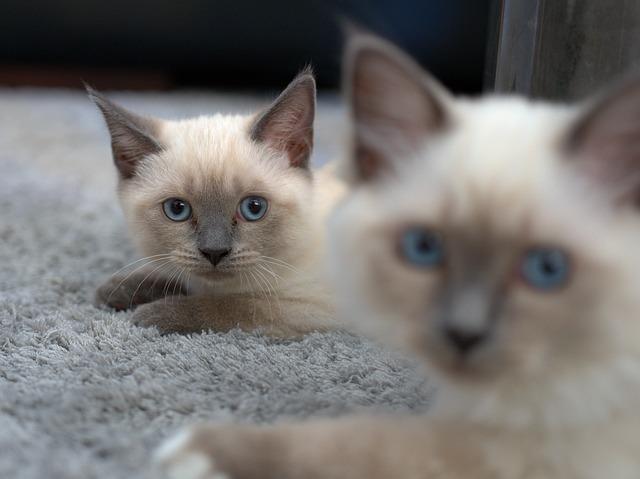 Katzen mit wenig Haarverlust