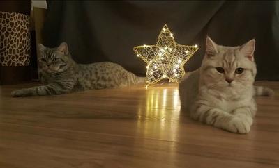 Katzenforum Frohe Weihnachten