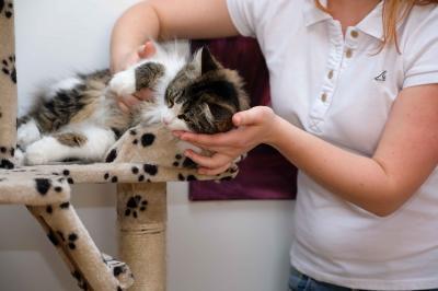 Katze Massage